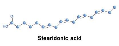 Το Stearidonic είναι ένα ωμέγα λιπαρό οξύ 3, Στοκ Φωτογραφία