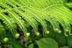 το swirly φύλλο στοκ φωτογραφία