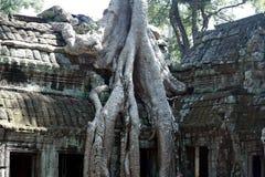 Το TA Phrom, Angkor, Siem συγκεντρώνει Στοκ φωτογραφία με δικαίωμα ελεύθερης χρήσης