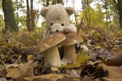 Το Teddy αντέχει, η συλλεκτική μηχανή μανιταριών Στοκ Φωτογραφία
