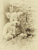 Το Teddy αντέχει κάθεται στα ξύλα Στοκ φωτογραφία με δικαίωμα ελεύθερης χρήσης