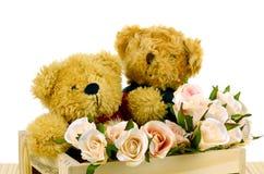 Το Teddy αντέχει και οδοντώνει τα τριαντάφυλλα στο κιβώτιο ξύλου πεύκων σε άσπρο Backgrou Στοκ Εικόνα