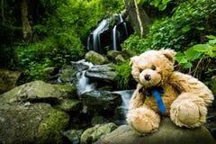 Το Teddy αντέχει κοντά στις πτώσεις καταρρακτών πέρα από τους mossy βράχους Στοκ Εικόνες