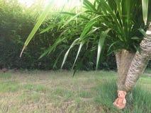 Το Teddy αντέχει μόνο κάτω από το δέντρο στον κήπο στοκ φωτογραφίες με δικαίωμα ελεύθερης χρήσης