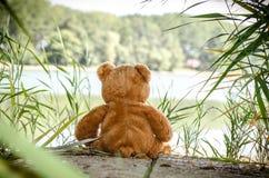 Το Teddy αντέχει το παιχνίδι Στοκ Φωτογραφία