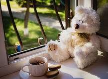 Το Teddy αντέχουν και το φλυτζάνι τσαγιού Στοκ φωτογραφίες με δικαίωμα ελεύθερης χρήσης