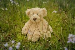 Το Teddy αφορά έναν πάγκο στοκ εικόνες με δικαίωμα ελεύθερης χρήσης