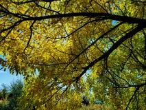 Το thro ουρανού τα φύλλα και οι κλάδοι πέφτει Στοκ Φωτογραφία