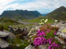 Το Transfagarasan είναι ένας από τους πιό θεαματικούς δρόμους βουνών στον κόσμο, Ρουμανία Στοκ φωτογραφία με δικαίωμα ελεύθερης χρήσης