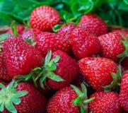 Το Trawberries είναι φρέσκο, juicy, νόστιμος σε έναν φυσικό στοκ εικόνες