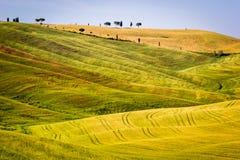 Το Tuscan τοπίο, κυλώντας λόφοι Στοκ εικόνες με δικαίωμα ελεύθερης χρήσης