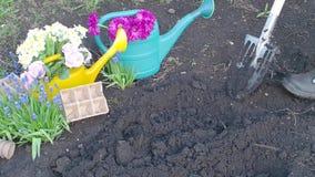 Το Unrecognizable άτομο σκάβει μια τρύπα από το φτυάρι στον κήπο απόθεμα βίντεο