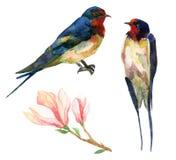 Το Watercolor καταπίνει Στοκ Εικόνα