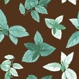 Το Watercolor χρωμάτισε τα φύλλα Κομψά φύλλα για το σχέδιο τέχνης ελεύθερη απεικόνιση δικαιώματος