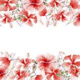 Το Wildflower αυξήθηκε πλαίσιο λουλουδιών σε ένα ύφος watercolor Στοκ Φωτογραφίες