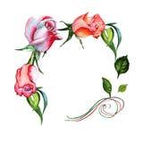 Το Wildflower αυξήθηκε πλαίσιο λουλουδιών σε ένα ύφος watercolor που απομονώθηκε Στοκ Φωτογραφία