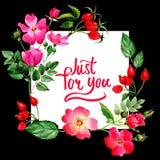 Το Wildflower αυξήθηκε πλαίσιο λουλουδιών arkansana σε ένα ύφος watercolor που απομονώθηκε Στοκ εικόνα με δικαίωμα ελεύθερης χρήσης