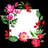 Το Wildflower αυξήθηκε πλαίσιο λουλουδιών arkansana σε ένα ύφος watercolor που απομονώθηκε Στοκ Εικόνες