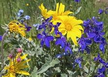 Το Wildflowers παλαιό επανδρώνει τη γενειάδα Στοκ Φωτογραφίες