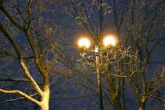 Το Winter Park, φωτισμός νύχτας, φω'τα που λάμπει, το χιόνι στους κλάδους, ο μαγικός του χειμώνα, α Στοκ Εικόνα