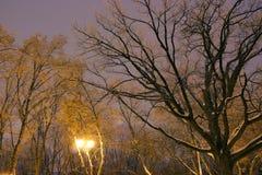 Το Winter Park, φωτισμός νύχτας, φω'τα που λάμπει, το χιόνι στους κλάδους, ο μαγικός του χειμώνα, α Στοκ Φωτογραφία