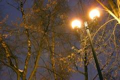 Το Winter Park, φωτισμός νύχτας, φω'τα που λάμπει, το χιόνι στους κλάδους, ο μαγικός του χειμώνα, α Στοκ εικόνες με δικαίωμα ελεύθερης χρήσης