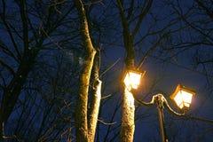 Το Winter Park, φωτισμός νύχτας, φω'τα που λάμπει, το χιόνι στους κλάδους, ο μαγικός του χειμώνα, α Στοκ εικόνα με δικαίωμα ελεύθερης χρήσης