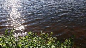 Τράπεζα της λίμνης με τα πράσινα φύλλα απόθεμα βίντεο