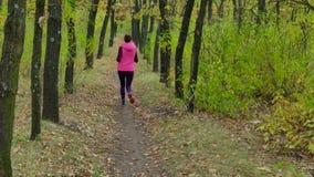 Τρέξιμο - δρομέων γυναικών στη δασική πορεία φθινοπώρου Κατάλληλη θηλυκή τρέχοντας κατάρτιση ιχνών αθλητών αθλητικής ικανότητας π απόθεμα βίντεο