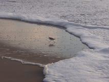Τρέξιμο! Η παλίρροια! Στοκ Φωτογραφίες