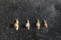 Τρέξιμο σαλιγκαριών, ζωική αστεία έννοια Στοκ φωτογραφία με δικαίωμα ελεύθερης χρήσης