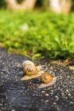 Τρέξιμο σαλιγκαριών, ζωική αστεία έννοια Στοκ Εικόνες