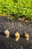 Τρέξιμο σαλιγκαριών, ζωική αστεία έννοια Στοκ Φωτογραφία