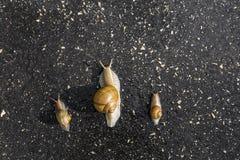 Τρέξιμο σαλιγκαριών, ζωικός αστείος γρήγορος ανταγωνισμός έννοιας Στοκ Φωτογραφίες