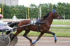 Τρέξιμο σε ένα άλογο αγώνων Στοκ Εικόνα