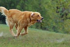τρέξιμο σκυλιών Στοκ εικόνα με δικαίωμα ελεύθερης χρήσης