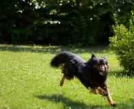 τρέξιμο σκυλιών στοκ εικόνες