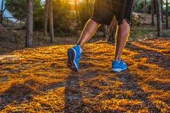 Τρέξιμο στο πάρκο στο ηλιοβασίλεμα Στοκ Εικόνα