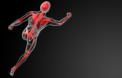 Τρέξιμο της ανθρώπινης ανατομίας από τις ακτίνες X στο κόκκινο Στοκ Φωτογραφίες
