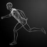 Τρέξιμο της ανθρώπινης ανατομίας από τις ακτίνες X Στοκ εικόνα με δικαίωμα ελεύθερης χρήσης