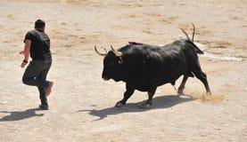Τρέξιμο του Bull και ατόμων Στοκ Εικόνες