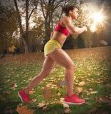 Τρέξιμο το φθινόπωρο στοκ φωτογραφίες με δικαίωμα ελεύθερης χρήσης