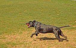 Τρέξιμο Frank, τρέξιμο στοκ φωτογραφίες