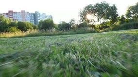 Τρέχοντας άποψη σκυλιών απόθεμα βίντεο