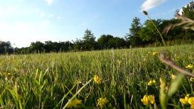 Τρέχοντας άποψη σκυλιών φιλμ μικρού μήκους