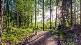 Τρέχοντας ίχνος το πρωί Στοκ εικόνες με δικαίωμα ελεύθερης χρήσης