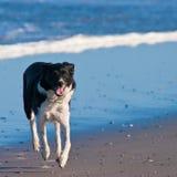 τρέχοντας νεολαίες σκυ& Στοκ φωτογραφίες με δικαίωμα ελεύθερης χρήσης