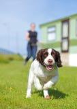 Τρέχοντας σκυλί κουταβιών Στοκ φωτογραφία με δικαίωμα ελεύθερης χρήσης