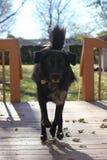 Τρέχοντας σκυλί Στοκ Φωτογραφία