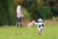 Τρέχοντας σκυλί με ένα κορίτσι στο υπόβαθρο στοκ εικόνες με δικαίωμα ελεύθερης χρήσης